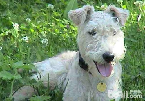 经常挑逗狗狗有什么害处-成犬饲养